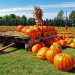 halloween file3341286392287