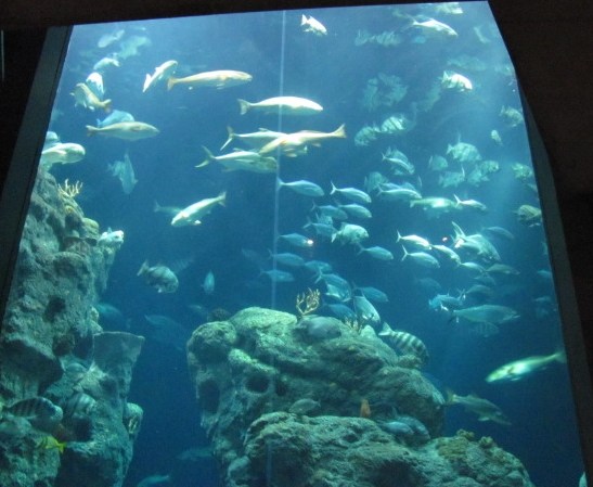 Main aquarium deep sea tank